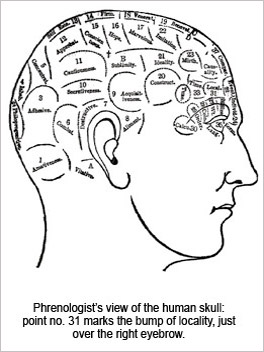Phrenologist's view of the human skull: point no. 31 marks the bump of locality, just over the right eyebrow.